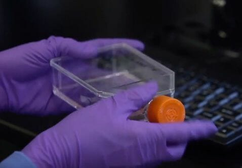 hongos laboratorio