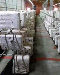 cultivo-shiitake-rioja