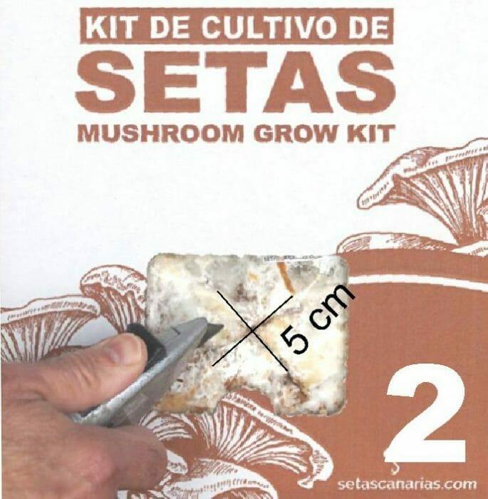 kit-cultivo-setas-corte
