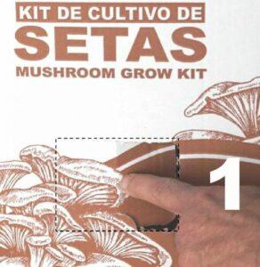 kit-cultivo-setas-ventana