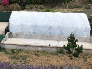 Invernadero cultivo setas
