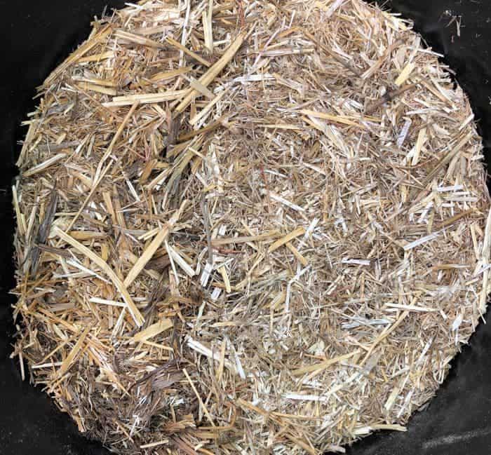 paja cortada cultivo de setas