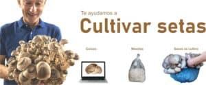 Cursos y Micelios para cultivo de setas